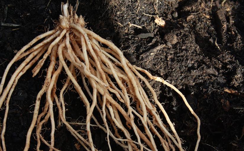 DIY rhizome
